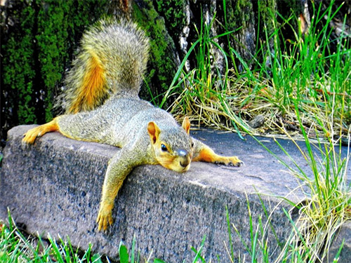 lazy german squirrel